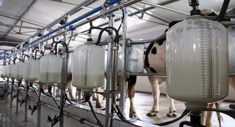 ما مدى سلامة الحليب الذي يشربه المغاربة؟
