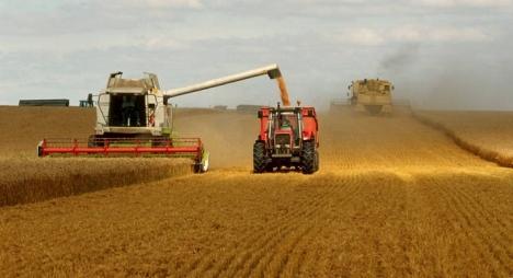 إنتاج المغرب من الحبوب بلغ إلى حد الآن 5.7 مليون قنطار