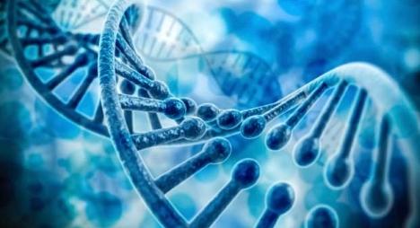 دراسة علمية: الجينات البشرية تبقى نشطة بعد الوفاة