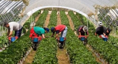 وزارة الشغل تصدر توضيحا بخصوص العاملات الفلاحيات بإسبانيا