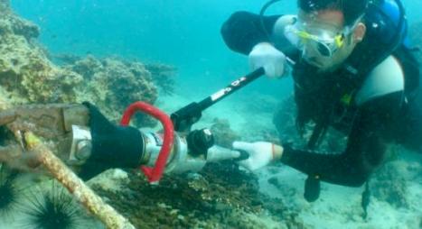عقوبات جديدة تنتظر المُخلّين بحماية المحيط والبيئة البحرية