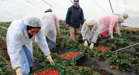 بلاغ : وزارة الشغل والادماج المهني توضح بخصوص تشغيل العاملات الفلاحيات بإسبانيا