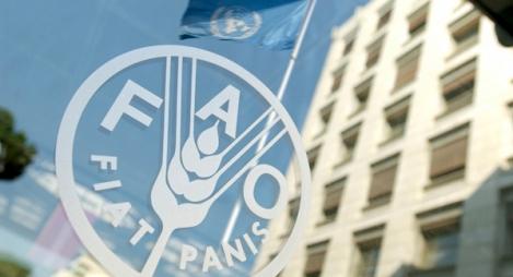 الفاو: أسعار الغذاء في العالم ترتفع بنسبة 8,2 في المائة