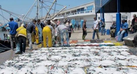 """تقرير: ارتفاع في قيمة """"منتجات الصيد الساحلي والتقليدي"""" بـ 7 بالمائة"""