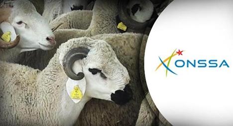 استعدادا لعيد الأضحى...تأطير مربي الماشية للتقيد بشروط السلامة الصحيـة