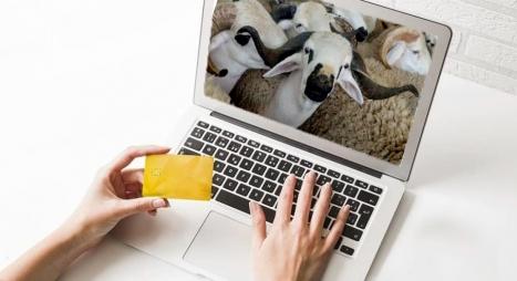 إقبال متزايد على اقتناء الأضحية عبر الانترنت