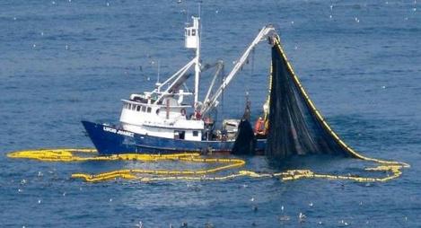 آفاق قضية الصحراء على ضوء اتفاق الصيد االبحري بين المغرب وأوروبا؟