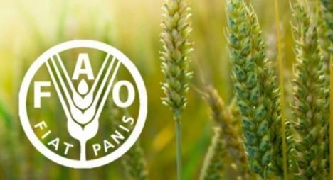 """""""فاو"""" تتوقع قفزة كبيرة في واردات العالم الغذائية"""