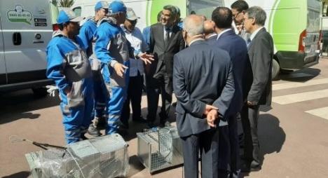 الدار البيضاء.. رصد 20 مليون درهم لمحاربة نواقل الأمراض وجمع الحيوانات الضالة