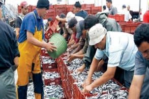قيمة تسويق السمك المغربي تبلغ 3 مليار درهم رغم...
