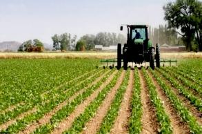 توزيع الزراعات الخريفية يشهد دينامية جيدة بفضل...