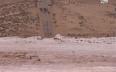جلالة الملك يتدخل في قضية  فيضان وادي الساقية...