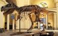 العثور على هيكل ديناصور بالمغرب عمر 95 مليون سنة