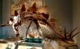 المغرب يسترجع هيكل ديناصور بحري هرب إلى باريس