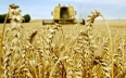 تجميع أكثر من 22 مليون قنطار من الحبوب إلى متم...