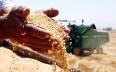 المغرب عبأ 13.3 مليون قنطار من الحبوب نهاية 2014