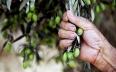 مكناس تحتضن الدورة السابعة للأيام المتوسطية لشجرة...